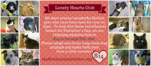 lonely hearts club special