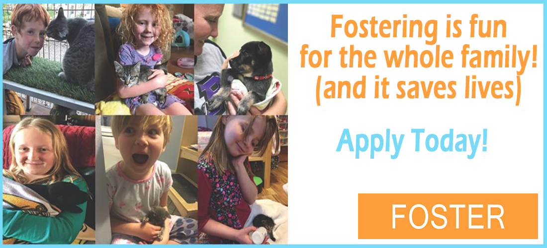 foster_homepage_banner_kids_fostering